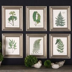 Fern Botanical Collection made by Botanical Expressions