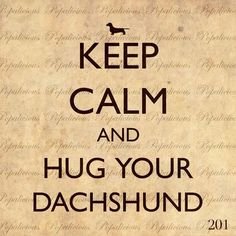 """have you hugged your dachshund today? (the answer is YES I have.) """"Keep calm and hug your Dachshund! Mini Dachshund, Daschund, Dachshund Quotes, Dachshund Humor, Piebald Dachshund, Dachshund Puppies, Dog Quotes, Qoutes, I Love Dogs"""