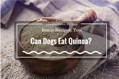 You Love It, But Can Dogs Eat Quinoa? Bonus Recipes, Too!: #dogs #Quinoa