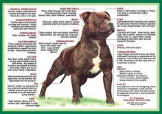Staffordshire Bull Terrier | Nala's Circle of Life: About Staffordshire Bull Terriers