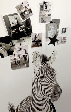 Wallpaper Magnet Sebra
