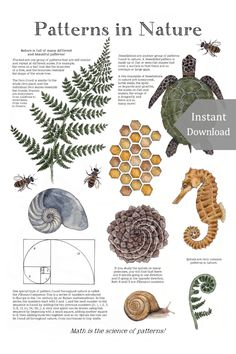 Patterns in Nature Math School Room Printable & Poster 12 x Maths In Nature, Printable Poster, Math School, School Days, Learning Cards, Inspired Learning, Nature Posters, Nature Table, Toddler Activities