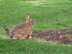 How to Mix Rabbit Deterrent