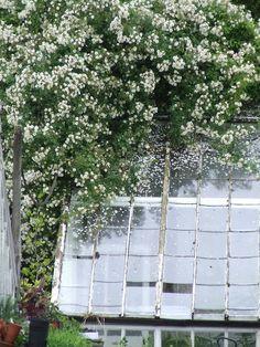 spring tree  from; http://sharonsantoni.com