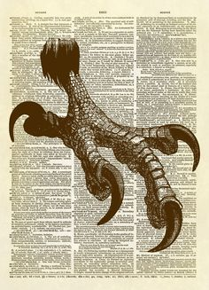 "This print features a bald eagle foot from the 1859 publication ""Animal Kingdom Illustrated Vol 2"". Bring some animal kingdom drama into your home decor! This is an amazing image printed on an upcycle"