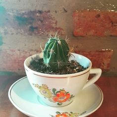 Taza antique Cactus
