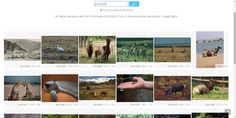 can we images Us Images, Tic Tac, Apps, Animals, Blog, Free Images, Banks, Culture, Animales