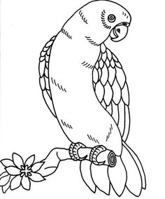 Bird Coloring Page Parrot