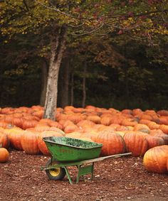 pumpkins,gorgeous...