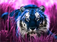Fractal Tiger Surrounded by Purple, Very Neat.