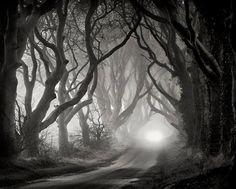 landscape photography, nature, beauty, forest | Favimages.net