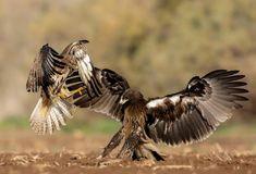 Animal Action, Bald Eagle, Bird, Animals, Animales, Animaux, Birds, Animal, Animais