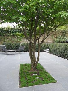 Need some low maintenance garden design ideas? Contemporary Garden Design, Landscape Design, Garden Modern, Contemporary Landscape, Back Gardens, Outdoor Gardens, Low Maintenance Garden Design, Lawn Edging, Garden Trees