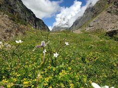 Trekking in this flowery meadows beyond Mana - the last Indian village.