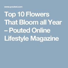 Top 10 Flowers That Bloom all Year – Pouted Online Lifestyle Magazine