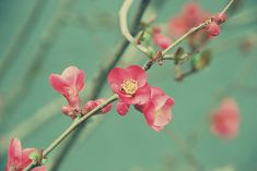 floral Prunus Mume, Dreamy Photography, Pretty Flowers, Pretty Pictures, Color Patterns, Eye Candy, Fashion Outfits, Clothes For Women, Spring