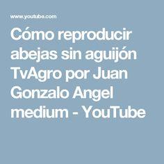 Cómo reproducir abejas sin aguijón TvAgro por Juan Gonzalo Angel medium - YouTube
