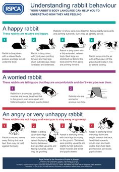 Understanding rabbit behaviour - Use this guide to help you recognise important body language signals Pet Bunny Rabbits, Meat Rabbits, Raising Rabbits, Baby Bunnies, Caring For Rabbits, Dwarf Bunnies, Bunny Bunny, All About Rabbits, Rabbit Facts