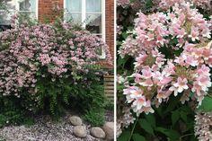 10 blommande buskar som tål allt Plants, Plant, Planting, Planets