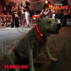 Lifestyle, Animals, Nocturne, Hs Sports, Brazil, Animais, Animales, Animaux, Animal