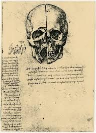 leonardo da vinci drawings, View of a Skull, c. Line Drawing, Drawing Sketches, Medical Anatomy, Anatomy Art, Cartography, Skull Art, Cool Art, Awesome Art, Art Lessons