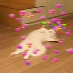 ✔ Memes Love Wallpaper Kermit The Frog Cute Baby Cats, Kittens Cutest, Cute Babies, Cute Cat Memes, Cute Love Memes, Heart Meme, Cute Cat Wallpaper, Cat Aesthetic, Wholesome Memes