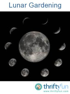 This guide is about lunar gardening. The gravity of the moon affects everything on earth and planting by moon phases has been practiced since ancient times.