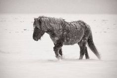 animals-snow-19.jpg (500×334)