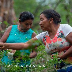 Você conhece a Pimenta Baniwa? Acho que você vai se apaixonar ela história e pelo sabor! Top Recipes, Getting To Know, Good Ideas
