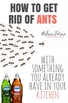 How to Get Rid of Ants with Something you Already Have in your Kitchen – Use Dawn Dish Soap, or Lemongrass Oil Spray safe for kids/pets
