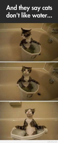 Funny cat chilling in the water