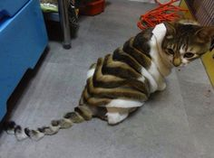 """Creative pet """"haircuts"""": Funky or funny? Youdecide."""