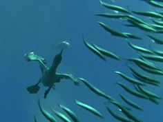 Flying near to fishes