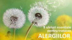 Uleiurile esentiale folosite pentru alergii au capacitatea de a sustine chimic organismul si ajuta sa depaseasca hipersensibilitatea... Dandelion, Flowers, Plants, Dandelions, Planters, Flower, Plant, Planting, Planets