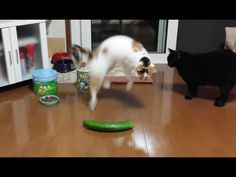 Funny Cats Scared of Random Things and Cucumbers Compilation! - C4Cats!