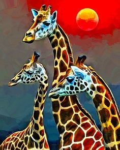 Giraffe Huddle by Scott Wallace #giraffe #wildlife