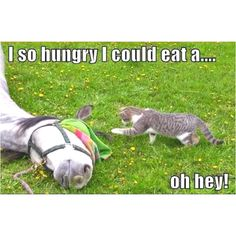 So hungry I could eat a horse