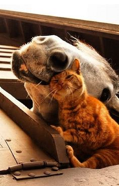 Horse & Cat! Especially for @Dianna Agron