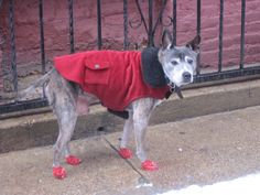 Dressed for the snow...and looking indignant