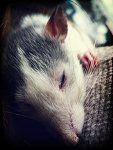 Sleepy head!