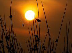 Sun Catcher by Alex Saberi