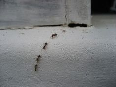 The next time you have ants in your home, skip calling an exterminator and use a simple three ingredient solution to rid your house of the pesky ants.