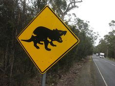 """Tasmanian Devil Roadsign"" in *Tasmanian*  [Photo by BotheredByBees (Peter Shanks) - April 25 2009]'h4d'121112"
