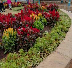 Sidewalk, Gardening, Plants, Side Walkway, Lawn And Garden, Walkway, Plant, Walkways, Planets