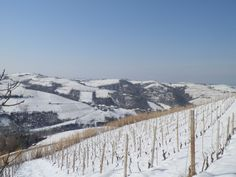 February: finally a little snow in our vineyards in the foreground and the hill opposite.