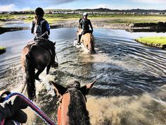 Have you ever wondered what the Mongol Derby is really like? Catherine Stott finished fifth in this year's race. She tells H&H about navigating 1,000km at a wild gallop, spending 13 hours a day in the saddle and dining on noodles and mutton.