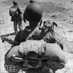 U.S marine with a dog, Second World War    Picture:Originally 'Life Magazine'