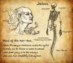 Skeleton of a merman. Would be interesting.