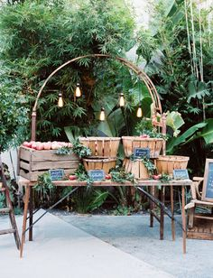fresh apple bar with edison bulbs hung from rustic arch...