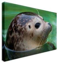Cute Young Seal by Abstract Art Canvas Printers, Canvas Art Cheap Prints by www.canvastown.co.uk